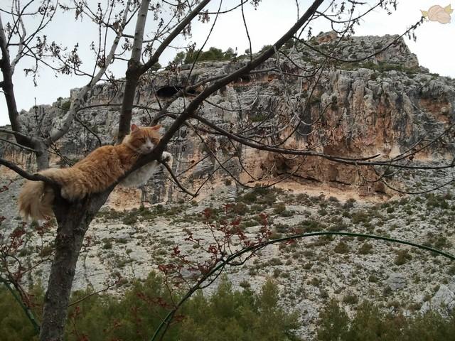Gato en un árbol en Nerpio
