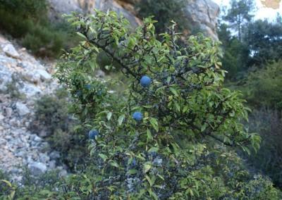 Flora y Fauna de Nerpio